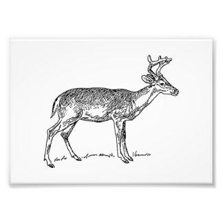 Young Buck Deer Photo Print