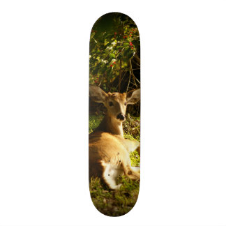 Young Buck in the Meadow Skateboards
