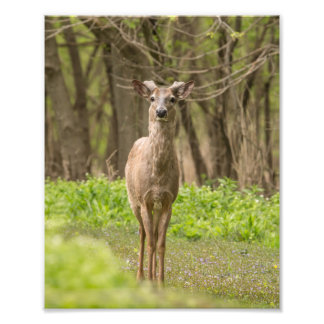Young Buck Photo