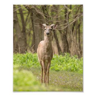 Young Buck Photo Print