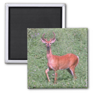 Young Buck Square Magnet