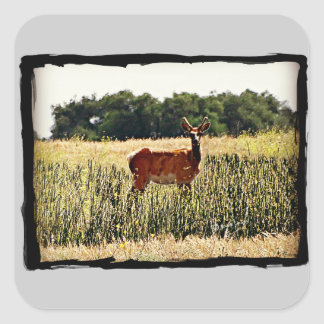 Young Bull Elk Square Sticker