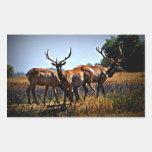 """Young Bulls"" - Elk Rectangular Sticker"