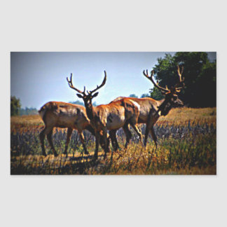 """Young Bulls"" - Elk Rectangular Sticker"