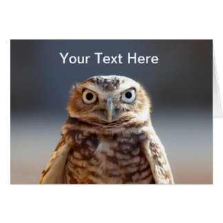 Young Burrowing Owl Card