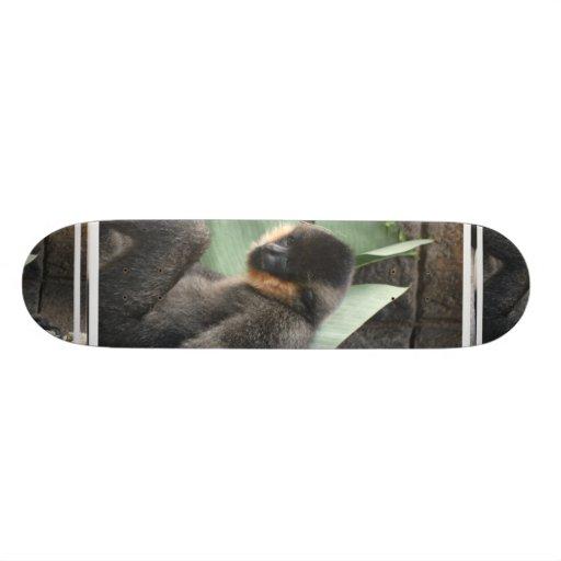 Young Capuchin Monkey Skateboard
