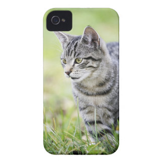 Young cat in nature iPhone 4 Case-Mate case