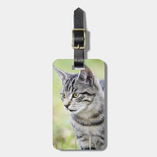 Young cat in nature luggage tag