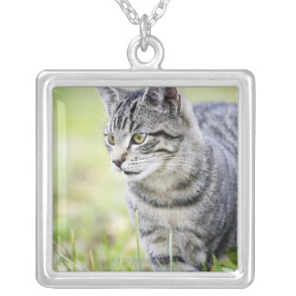 Young cat in nature silver plated necklace