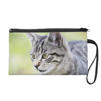 Young cat in nature wristlet
