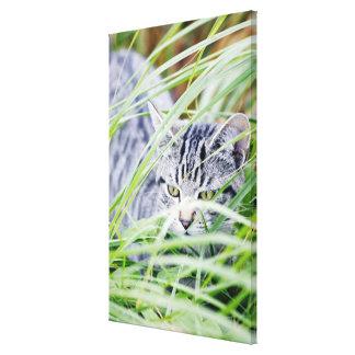 young cat portrait canvas print