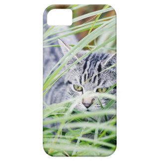 young cat portrait iPhone 5 case