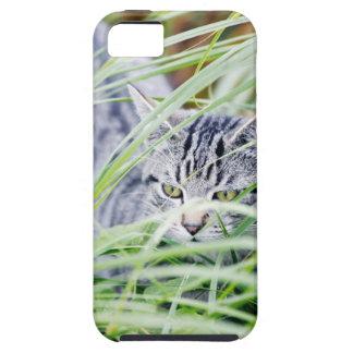 young cat portrait iPhone 5 cases