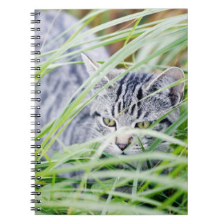 young cat portrait notebook