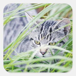 young cat portrait square sticker