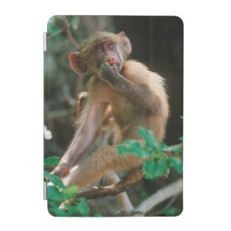 Young Chacma Baboon (Papio Ursinus) Sitting iPad Mini Cover