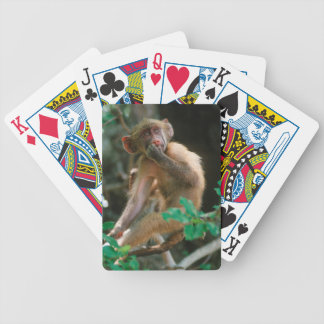 Young Chacma Baboon (Papio Ursinus) Sitting Poker Deck