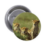 Young Cheetah Group Button
