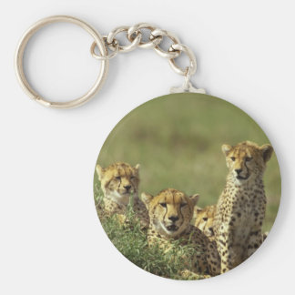 Young Cheetah Group Key Chains