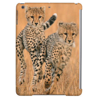 Young Cheetahs (Acinonyx Jubatus) Running