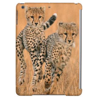 Young Cheetahs (Acinonyx Jubatus) Running