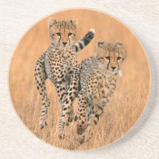 Young Cheetahs (Acinonyx Jubatus) Running Beverage Coaster
