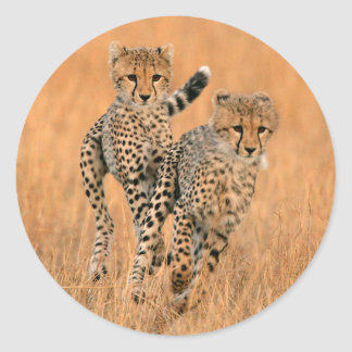 Young Cheetahs (Acinonyx Jubatus) Running Classic Round Sticker