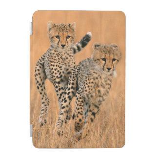 Young Cheetahs (Acinonyx Jubatus) Running iPad Mini Cover