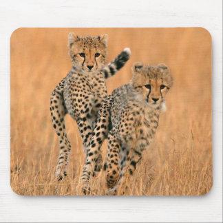 Young Cheetahs (Acinonyx Jubatus) Running Mouse Mat