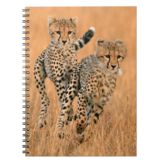 Young Cheetahs (Acinonyx Jubatus) Running Notebook
