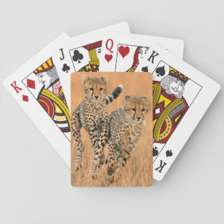 Young Cheetahs (Acinonyx Jubatus) Running Playing Cards