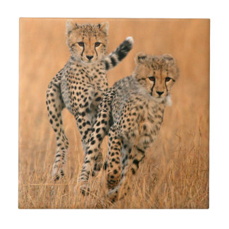 Young Cheetahs (Acinonyx Jubatus) Running Tile