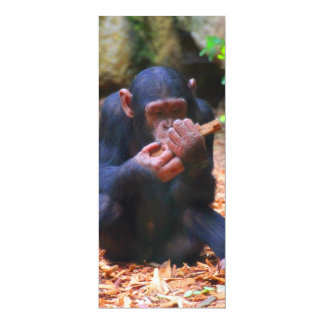 young chimpanzee 03 10 cm x 24 cm invitation card