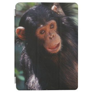 Young Chimpanzee hanging at forest iPad Air Cover