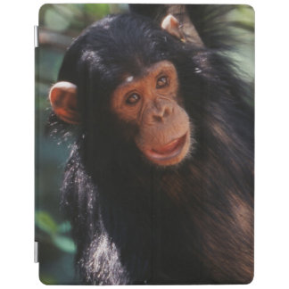 Young Chimpanzee hanging at forest iPad Cover