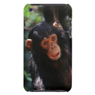 Young Chimpanzee hanging at forest iPod Touch Case-Mate Case
