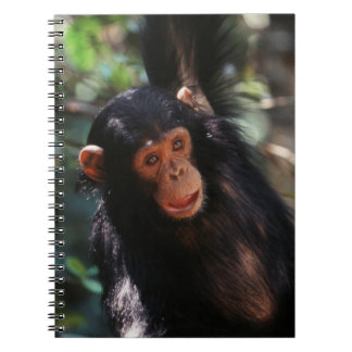Young Chimpanzee hanging at forest Notebooks