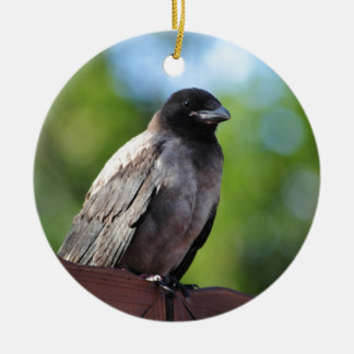 Young Crow Christmas Ornament