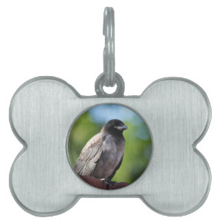 Young Crow Pet Tag