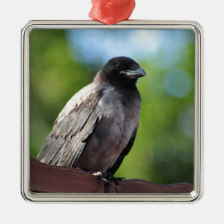 Young Crow Silver-Colored Square Decoration