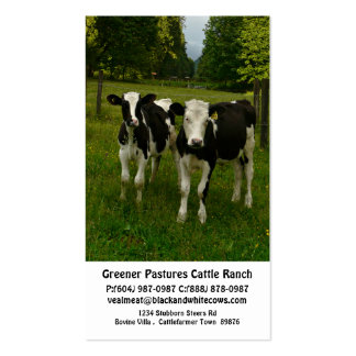 Young Dairy Steer Calves in Pasture Setting Business Card