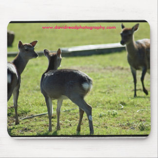 Young Deer Mouse Pad