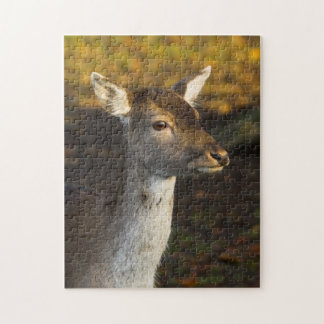 Young Deer Puzzle/Jigsaw Jigsaw Puzzle
