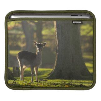 Young Deer Rickshaw iPad 2 Sleeve