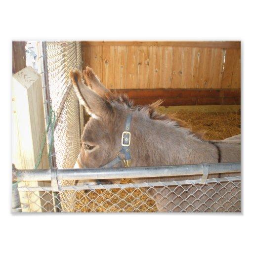 Young Donkey Art Photo