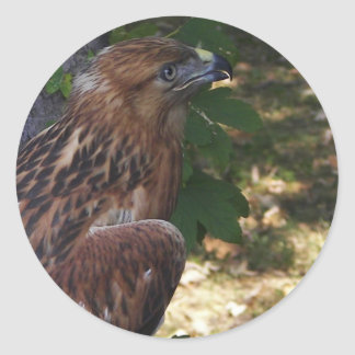 Young Eagle Classic Round Sticker