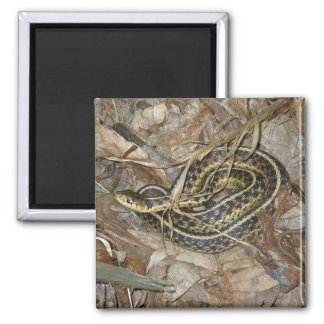 Young Eastern Garter Snake Coordinating Items Square Magnet