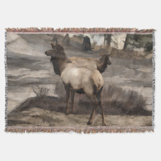 Young Elk Bucks   -  Banff Alberta Throw Blanket