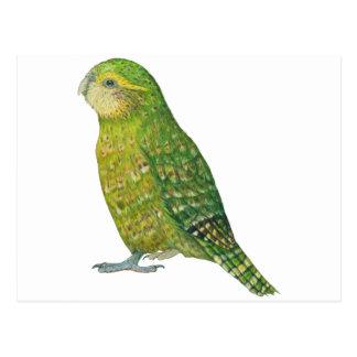 Young Female Kakapo Postcard