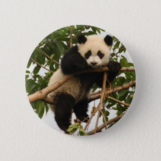 Young giant panda 6 cm round badge